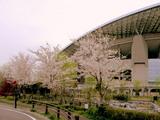 07年4月7日埼スタの桜