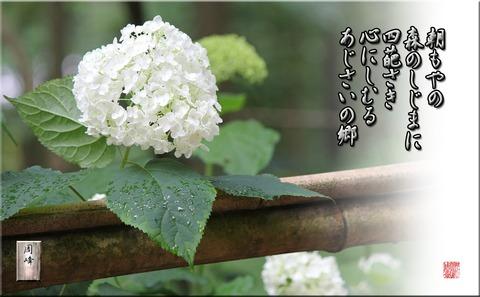 yohirasakanya