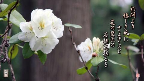 shiyakunage