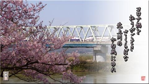 iwainosakura