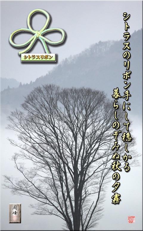 shitorasu