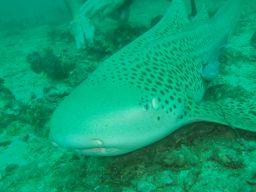 プーケット島 サメ