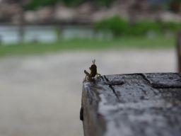プーケット島 虫