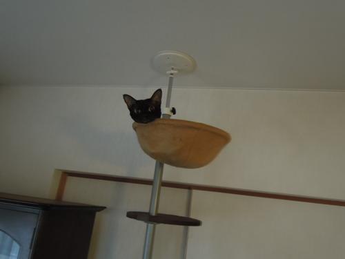 ヤマハG2B,Tさんの猫、KG5C入荷 004