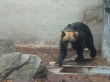 zoo11.jpg