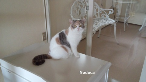 nodoca