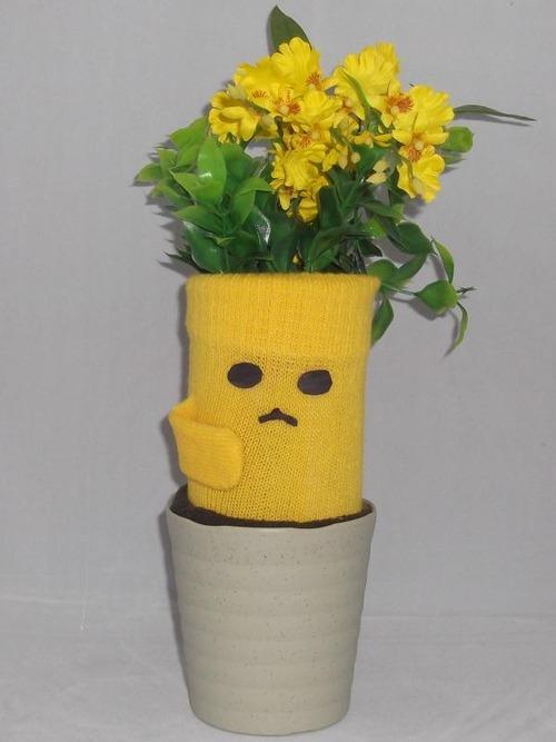 鉢植えタンポラポット002