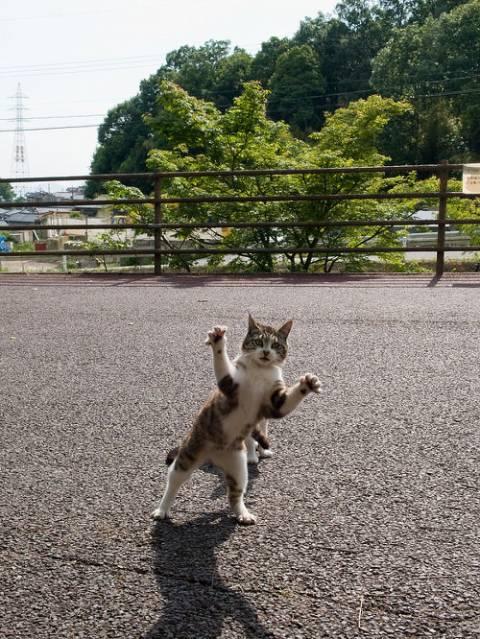 飛びかかりそうに威嚇する猫