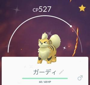 【色違い】ガーディ