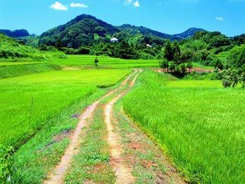 田舎の草道