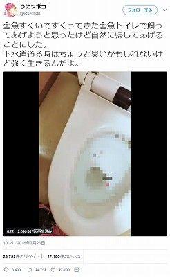生きた金魚をトイレに流した女「自然に帰してあげることにした」