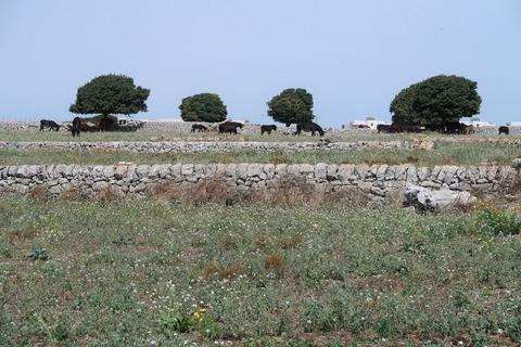 ラグーザムーロアセッコと馬の放牧Sep2018