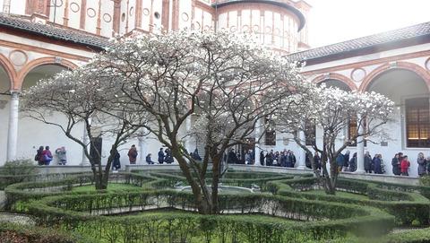 SMG教会中庭の梅か201803