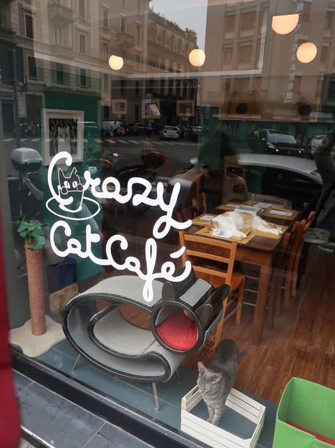 クレージーキャットカフェの猫のぞきSep2018