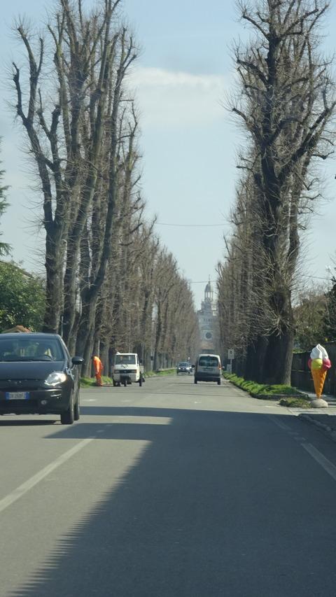 パヴィアCチェルトーザ前の並木 (1)