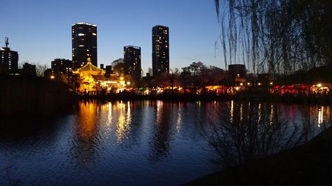 201704不忍池の夜桜 (2)
