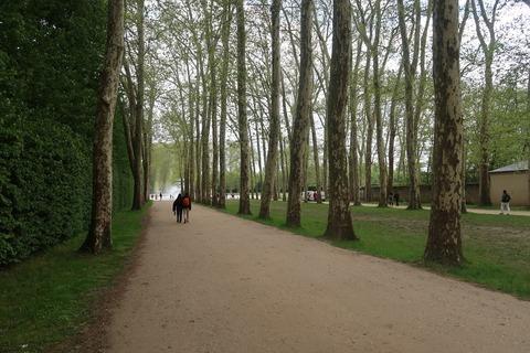 Versailles237アポロンへ戻る森の道