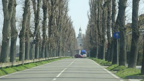 パヴィアCチェルトーザ前の並木 (2)