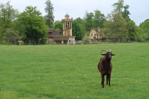 VersaillesPetit Trianon438マルボロー塔と黒ヤギ