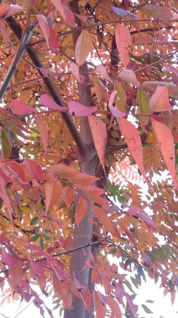 かぶれ ハゼ の 木