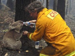コアラと消防士