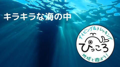 【90秒動画】キラキラな海の中