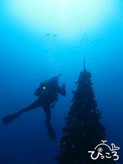 2012-12-13クリスマスツリーと一緒