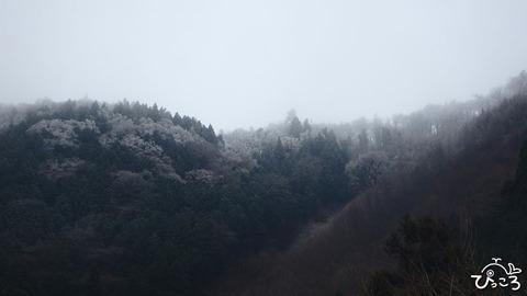 0131_遠くからの霧氷