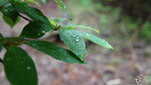 水滴_200602