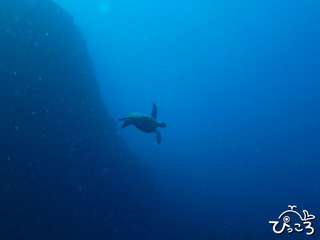 2012-11-25カメとアジ根