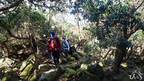 岩ゴロゴロの登山道_P1100081