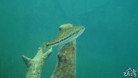 0926_淡水魚
