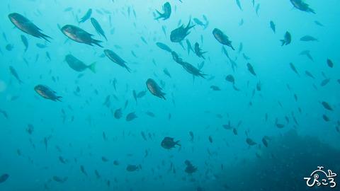 1103_魚の群れ
