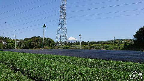 富士山と茶畑_210421