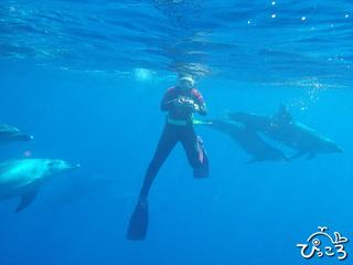 イルカに囲まれ・・・