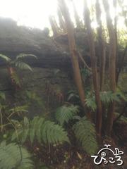 2012-12-17森の中の溶岩