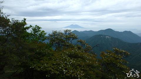 ゴヨウツツジごしの富士山