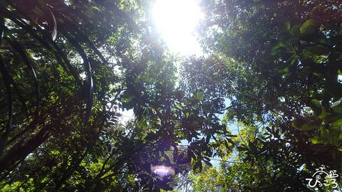 ニューカレ:ジャングル