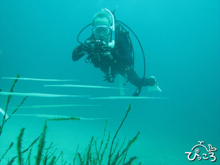 水中写真に挑戦