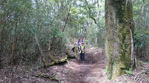 190503_歩きやすい登山道