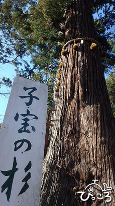 0218_子宝の杉