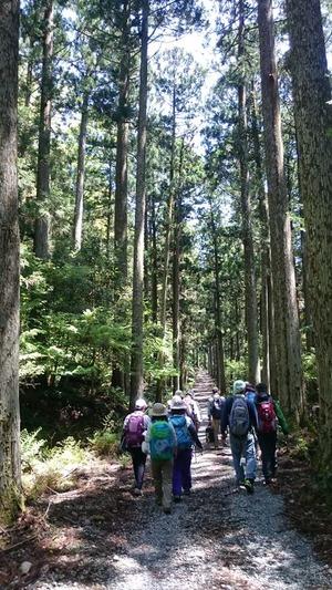 杉林の一本道