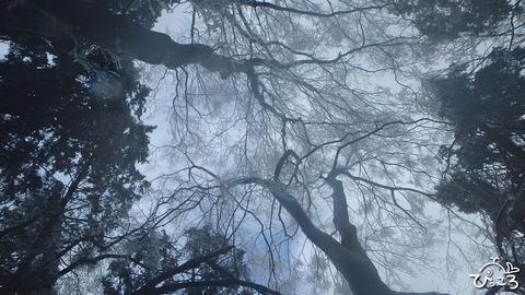 0131_ブナの枝
