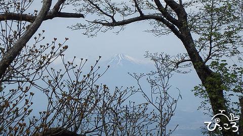 木々の間から富士山@天城山