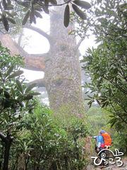 巨木にみとれて