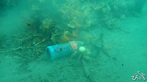 20190620_水中のゴミ