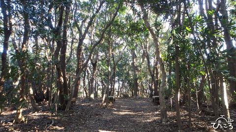 200218_海岸線の森