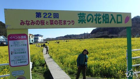 200218_菜の花