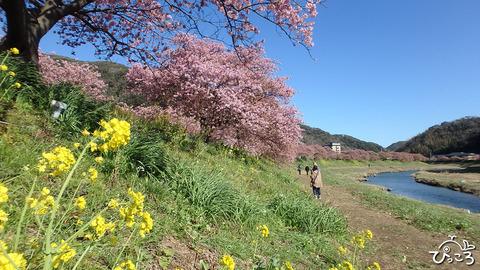 200218_みなみの桜まつり