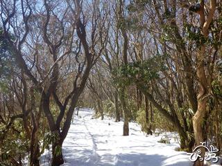 2013-1-30雪の残る登山道